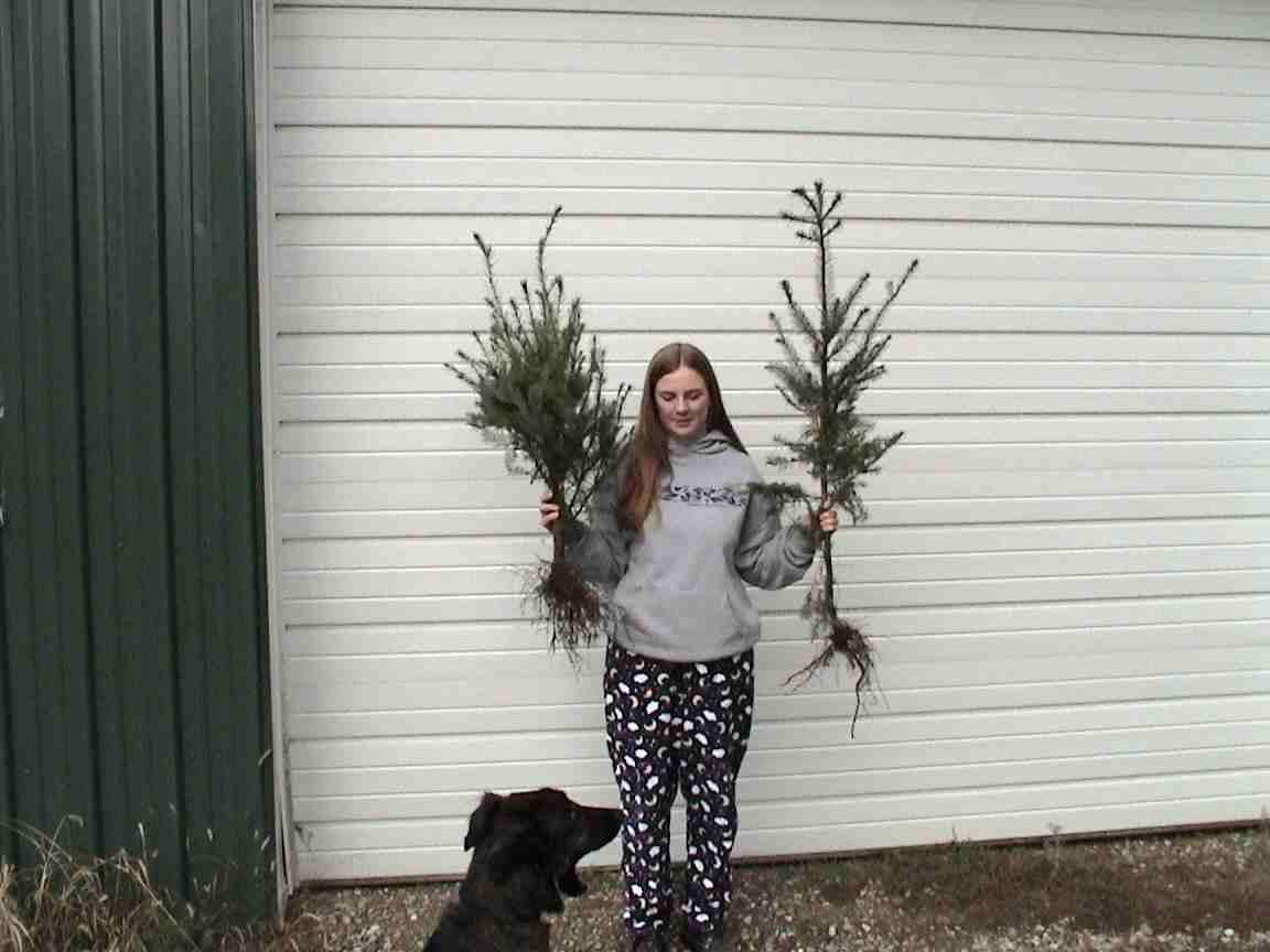 Christmas Tree Farm In Texas
